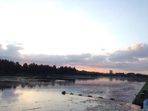 早朝の水元公園